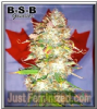 B-S-B Genetics Auto Northern Big Bud Fem 5 Seeds